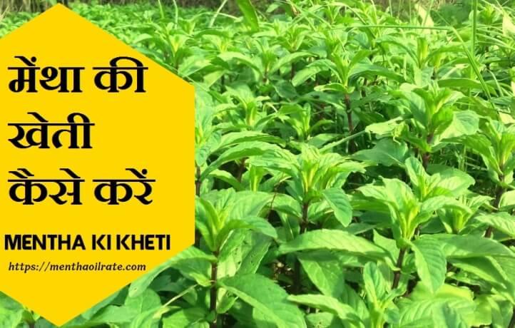 मेंथा की खेती कैसे करें   Mentha Ki Kheti Kaise Kare